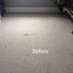 Bedroom-Wall-to-Wall-Carpet-Cleaning-Novato-A