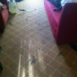 Novato-Carpet-Clean-before