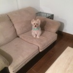 Novato-Sofa-Pet-Stain-Cleaning