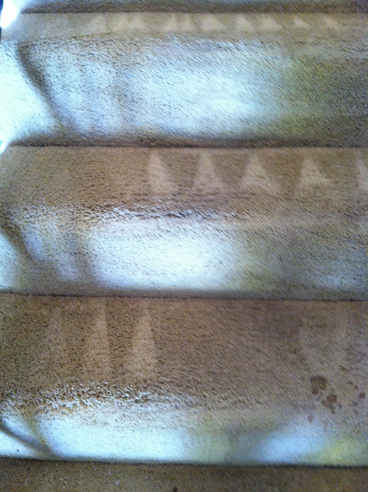 Carpet Cleaning Novato 415 231 2110