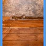 Wall-Mold-Removal-Novato