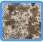 Water-Mold-Removal-Novato